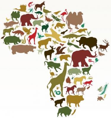 Afrique animaux
