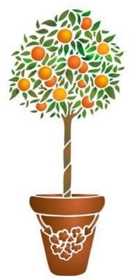 Oranger sur tige