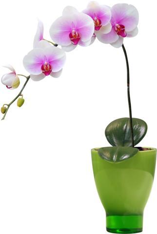 Sticker orchidee vase sti10009 autocollant