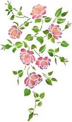 Retombée roses anciennes