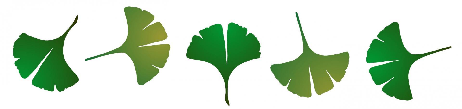 Fr783426 feuilles arrondies frise