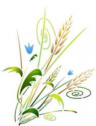Bouquet de blés design