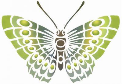 Papillon vue de dessus
