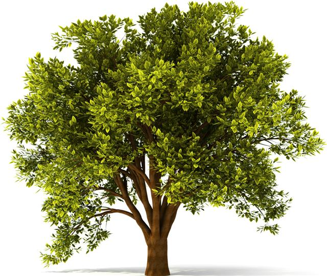 Stickermural arbre sti2002 arbreautocollant