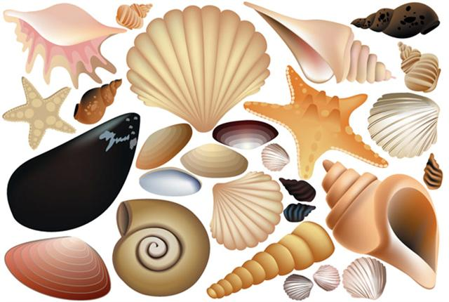 Stickers autocollants pochoirs coquillages marins